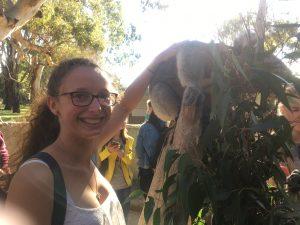 A koala selfie